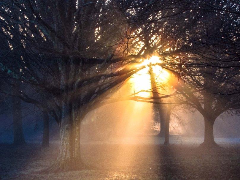 sun-through-trees-0385